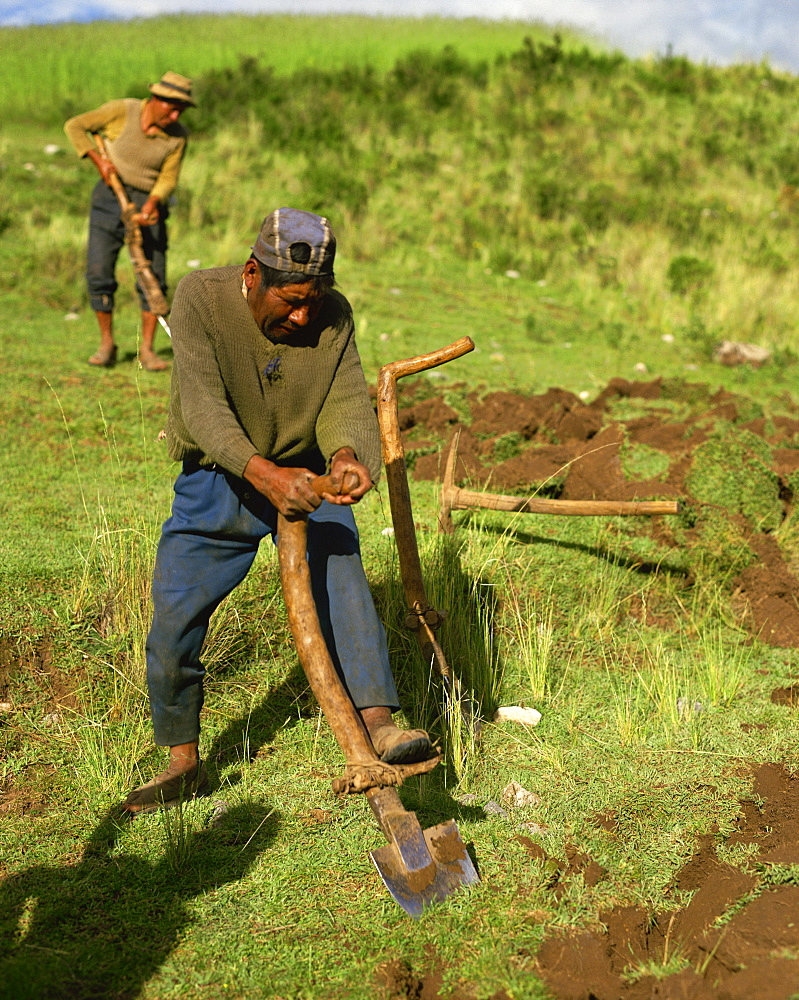 Man using version of Inca foot plough, near Cuzco, Peru, South America