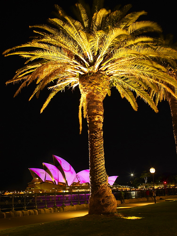 Festival of Light, Sydney Opera House and palm tree, Sydney, New South Wales, Australia, Pacific
