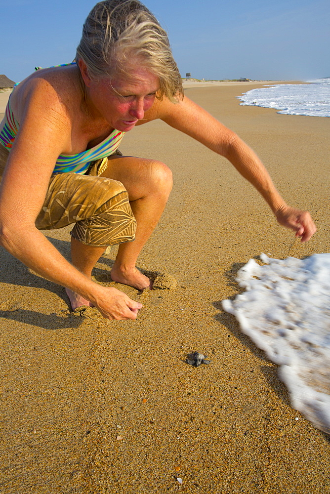 Releasing green sea turtle, Hotelito Desconocido Sanctuary Reserve and Spa, Costalegre, Jalisco, Mexico, North America - 632-5520