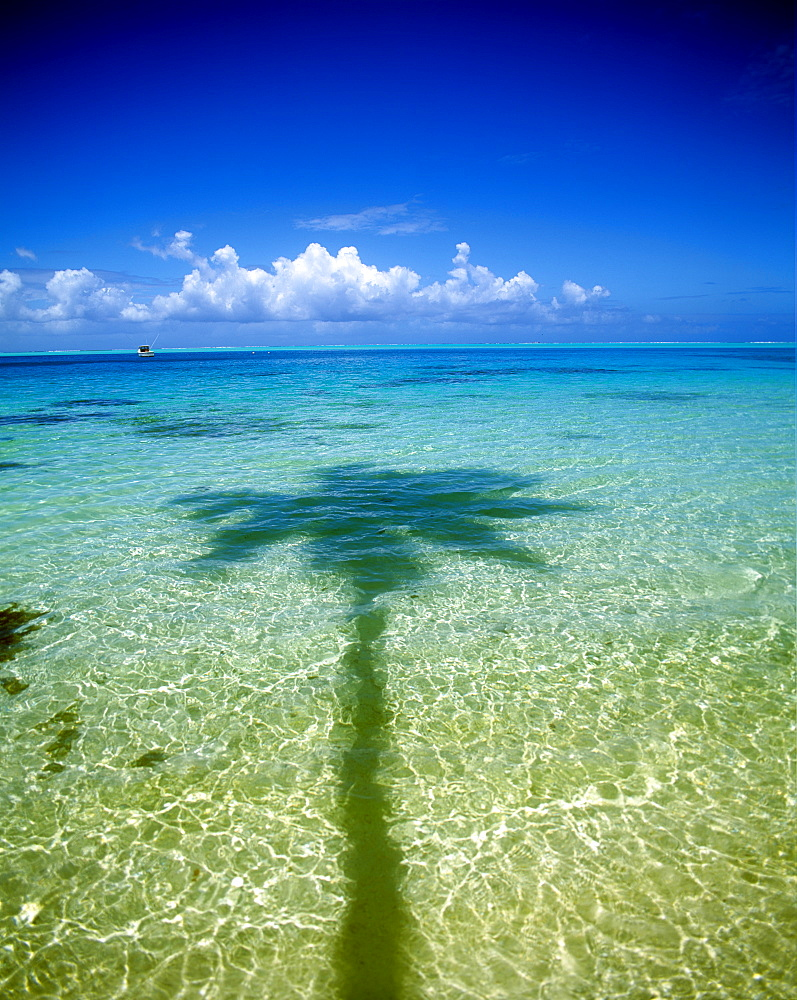 Shadow of palm tree on ocean, French Polynesia, Pacific