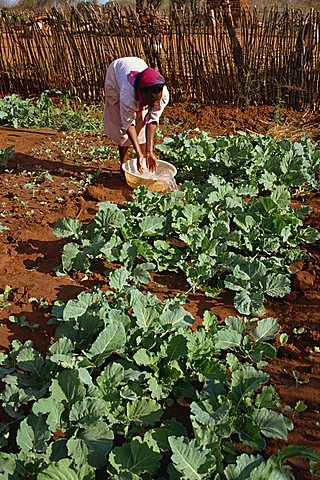 Vegetable farm benefitting from water, Kibwezi, Kenya, East Africa, Africa - 640-939
