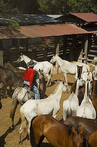 Horses, Hacienda Gauachipelin,near Rincon de la Vieja National Park, Gaunacaste, Costa Rica