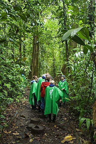 Walking in the rain forest, Tortuguero National Park, Costa Rica, Central America