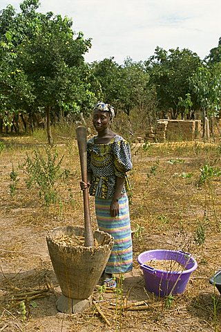 Pounding millet for flour, near Banjul, Gambia, West Africa, Africa