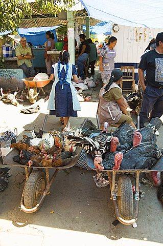 Turkeys for sale in the market, Zaachila, Oaxaca, Mexico, North America