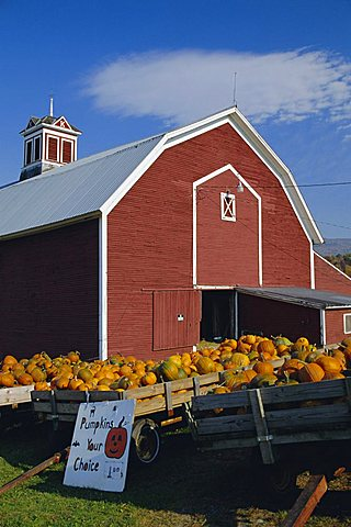 Pumpkins for sale in front of a red barn, Vermont, New England, USA