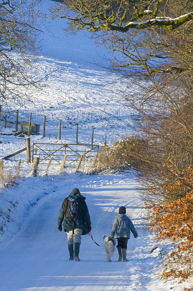 A man and boy with a dog walk along a snowy lane, Newbridge-on-Wye, Powys, Wales, United Kingdom, Europe - 663-803