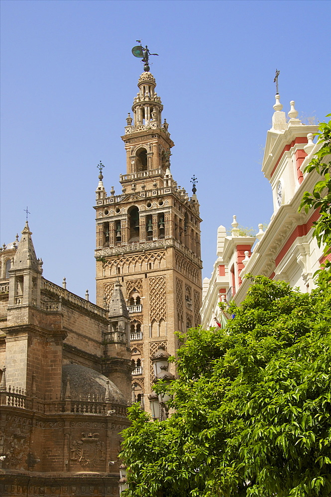 Giralda and cathedral, Plaza Virgen de los Reyes, Seville, Andalusia, Spain, Europe