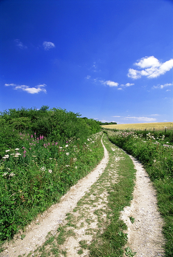 Curved path through countryside, Old Winchester Hill, Hampshire, England, United Kingdom, Europe