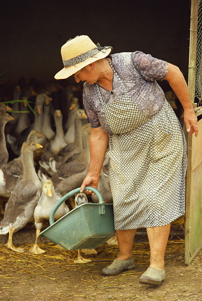 Portrait of a woman feeding geese on a goose farm in Gascony, Midi-Pyrenees, France, Europe