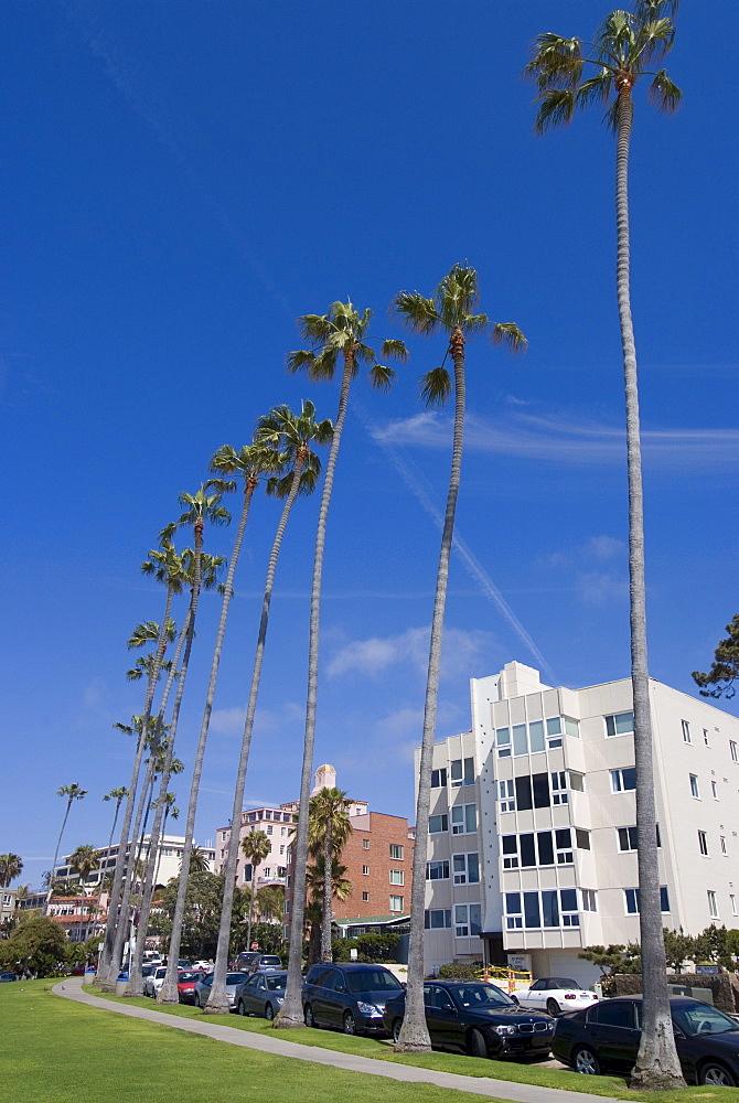 La Jolla, near San Diego, California, United States of America, North America