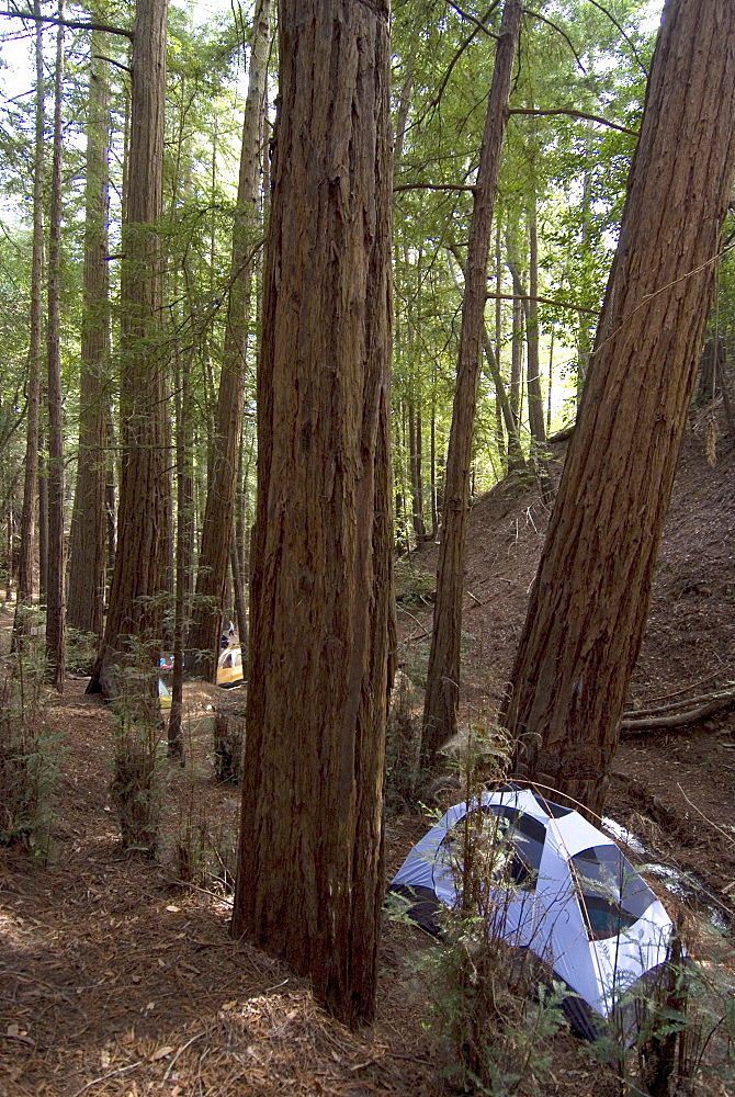 Campsite in the middle of the redwood forest, Ventana, Big Sur, California, United States of America, North America