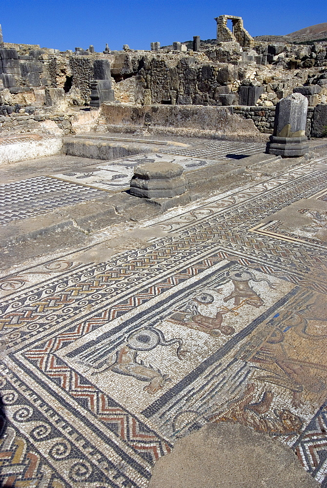 House of Orpheus, Roman site of Volubilis, UNESCO World Heritage Site, Morocco, North Africa, Africa