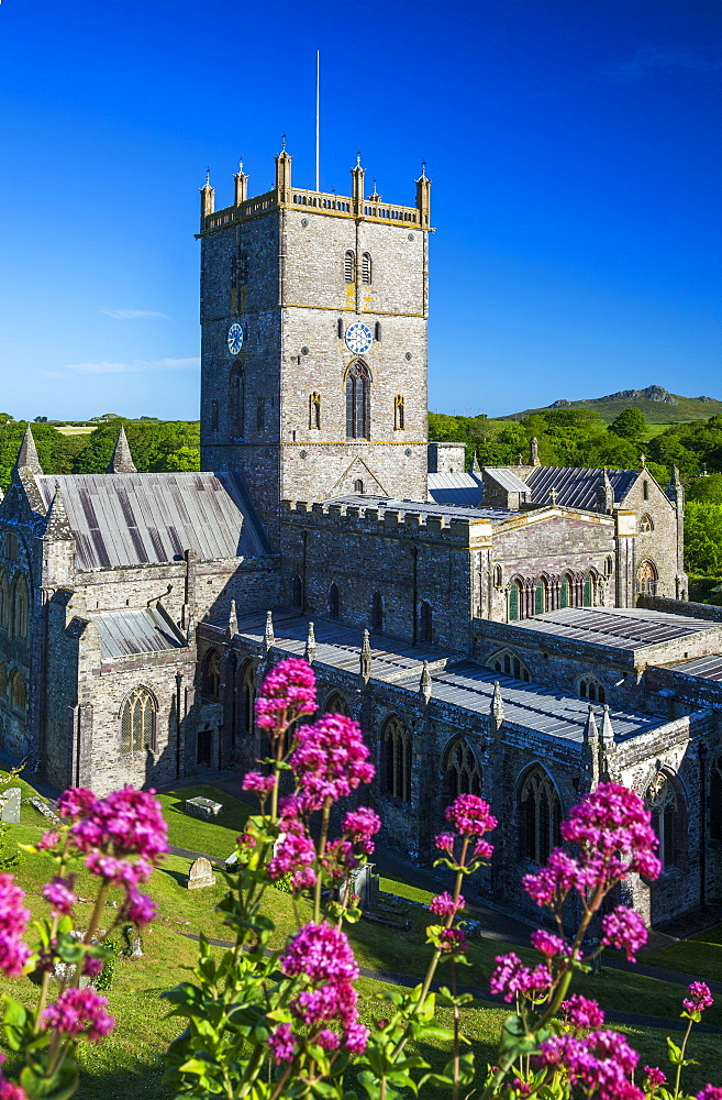 St. Davids Cathedral, Pembrokeshire, Wales, United Kingdom, Europe - 696-784