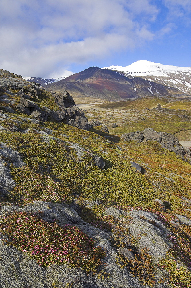 Moss covered lava beds surround Snaefellsjokull, an active strato volcano capped in snow and ice, on the Snaefellsnes Peninsula, North West area, Iceland, Polar Regions