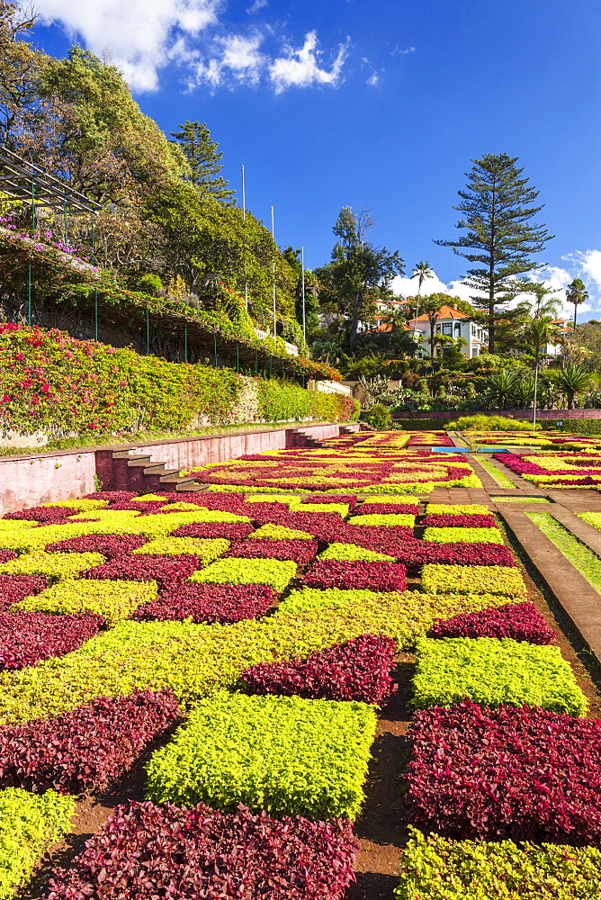 Formal garden in Madeira Botanical gardens, Jardim Botanico, above the capital city of funchal, Madeira, Portugal, EU, Europe