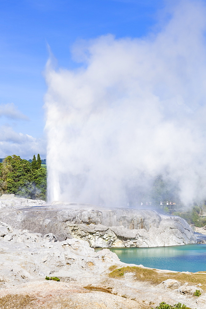 Pohutu geyser, Te Puia, Whakarewarewa Thermal Valley, Rotorua, North Island, New Zealand, Pacific