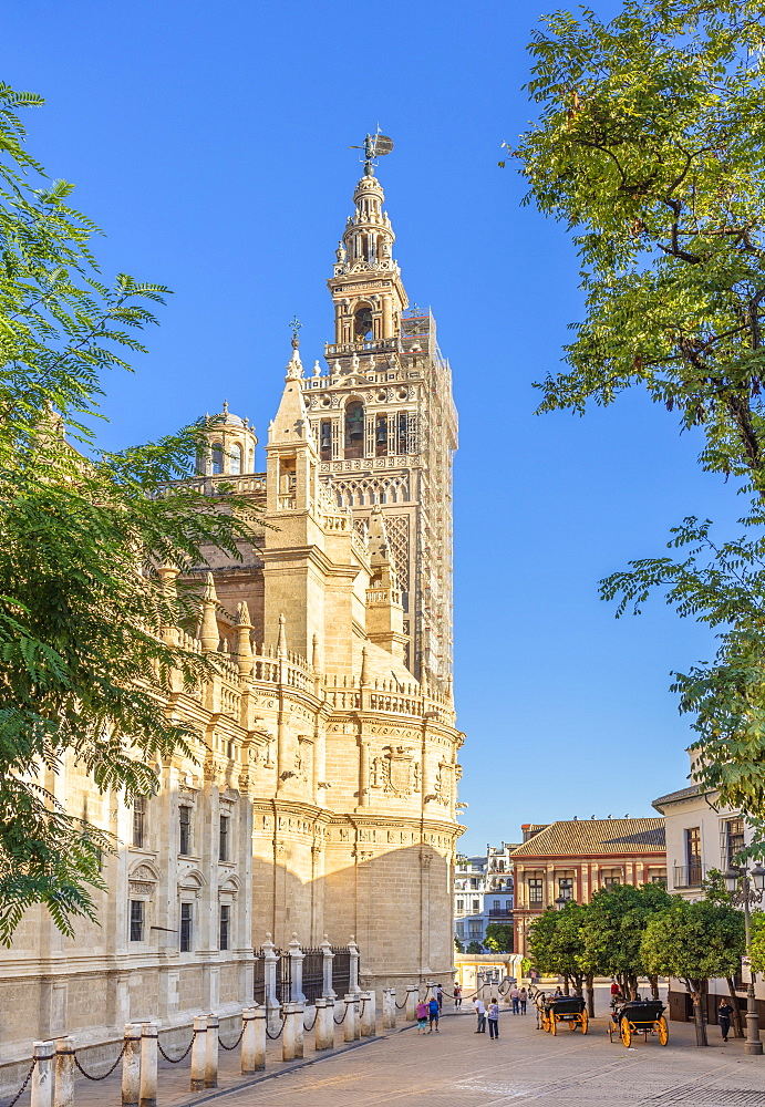 Seville Cathedral of Saint Mary of the See, and La Giralda bell tower, UNESCO World Heritage Site, Seville, Andalusia, Spain, Europe