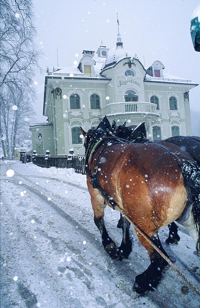 Horse-drawn sleigh in the snow, Schwangau