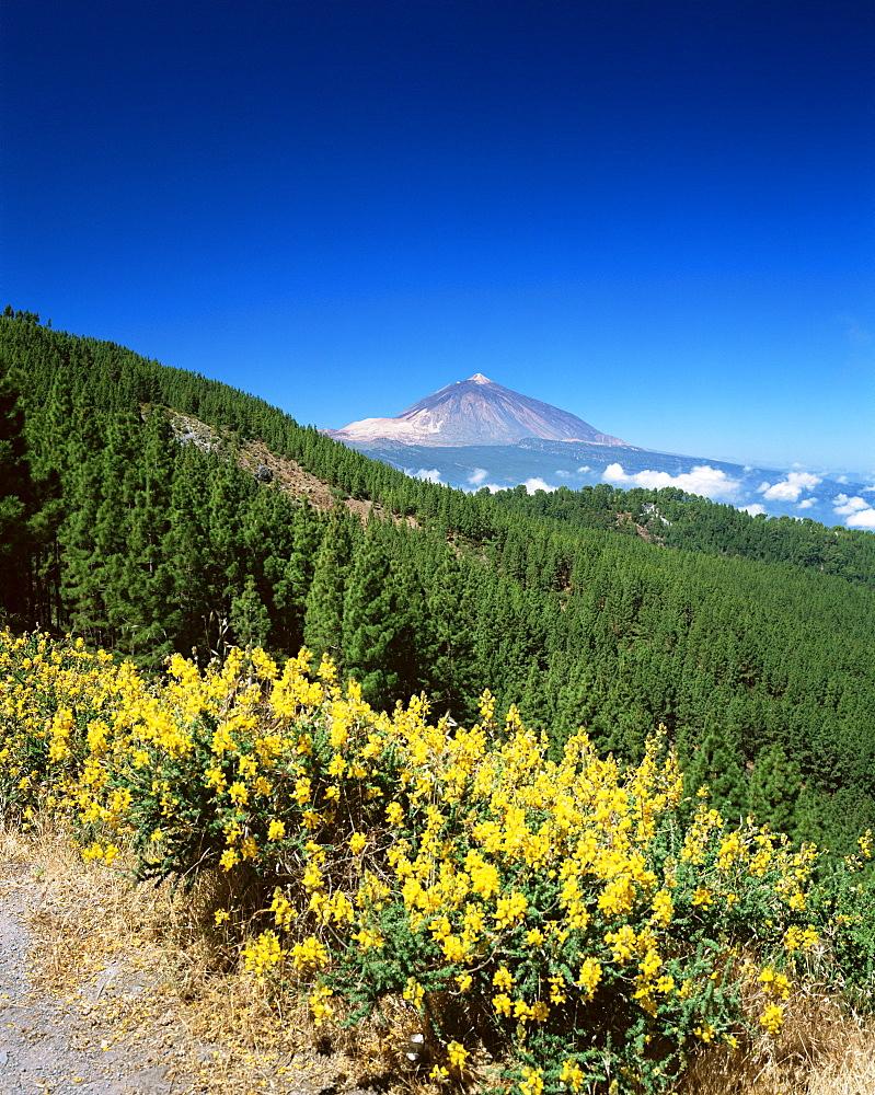 Mount Teide and pine trees from Mirador Ortuno, Parque Nacional del Teide, Tenerife, Canary Islands, Spain, Atlantic, Europe