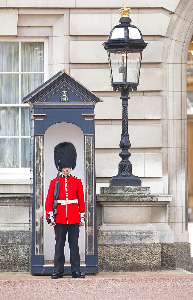 Royal Guard standing outside Buckingham Palace, London, England, United Kingdom, Europe