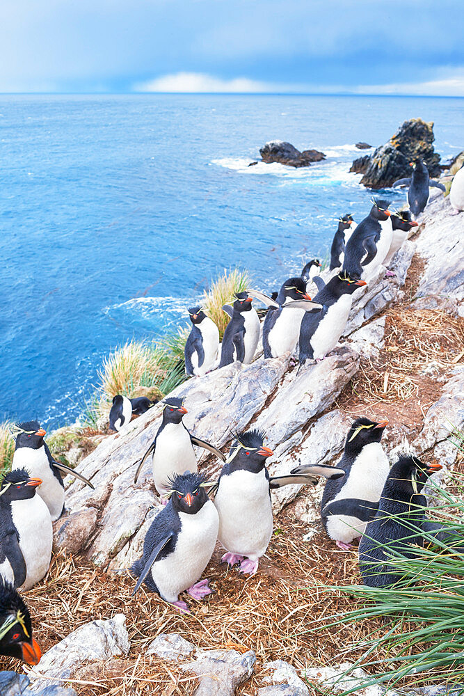 Group of rockhopper penguins (Eudyptes chrysocome chrysocome) on a rocky islet, East Falkland, Falkland Islands, South America - 718-2627