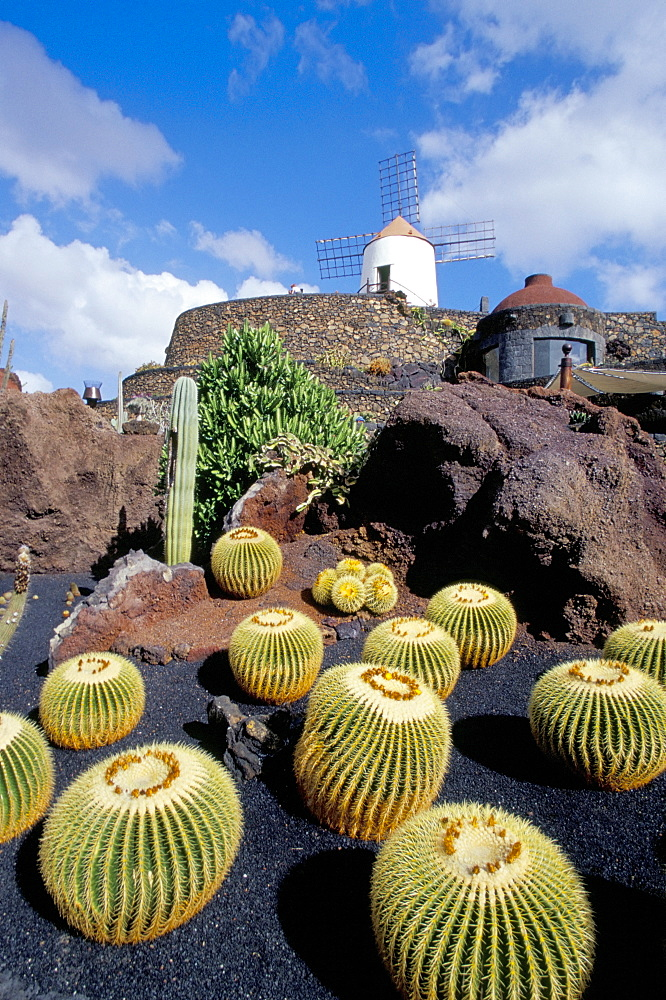 Cacti and windmill at Jardin de los Cactus, Cesar Manrique's work of art, Lanzarote, Canary Islands, Spain, Atlantic, Europe - 718-81