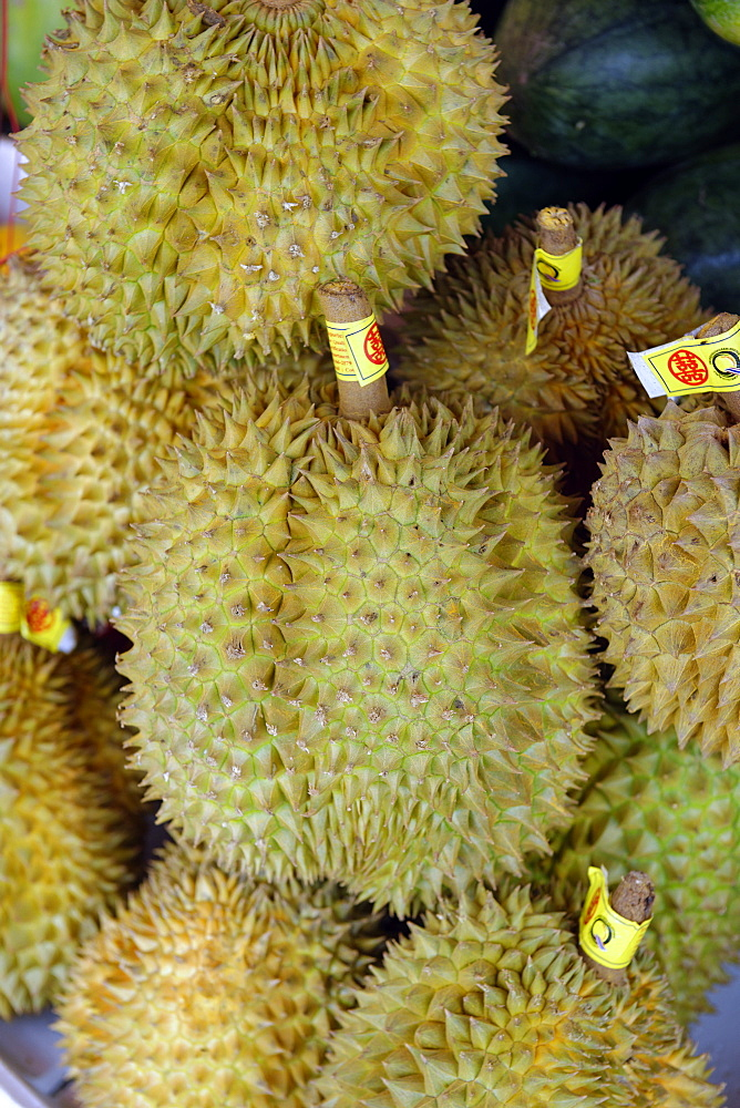 The durian, fruit of several tree species belonging to the genus Durio and the Malvaceae family, Republic of the Union of Myanmar (Burma), Asia