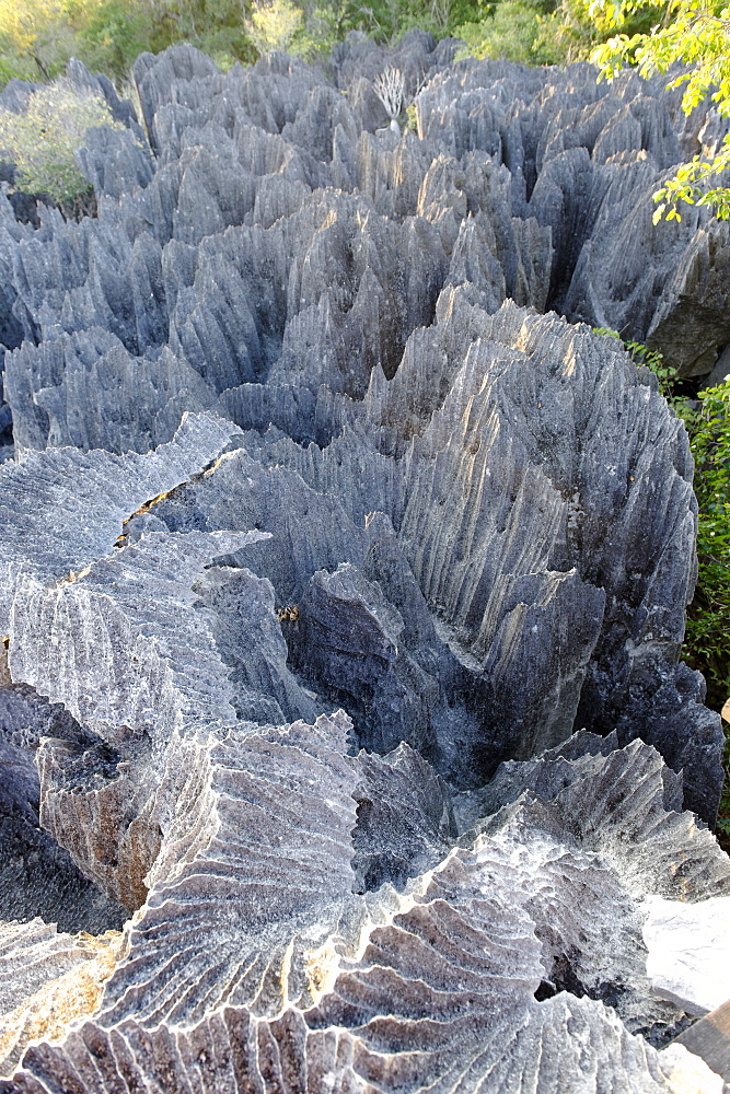 Tsingy de Bemaraha Strict Nature Reserve, UNESCO World Heritage Site, near the western coast in Melaky Region, Madagascar, Africa  - 724-2447