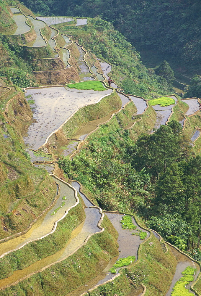 Banaue terraced rice fields, UNESCO World Heritage Site, northern area, island of Luzon, Philippines, Southeast Asia, Asia