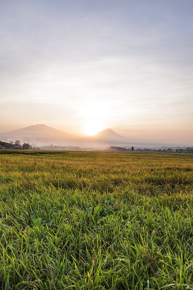 Rice fields and volcanoes, Java, Indonesia, Southeast Asia, Asia