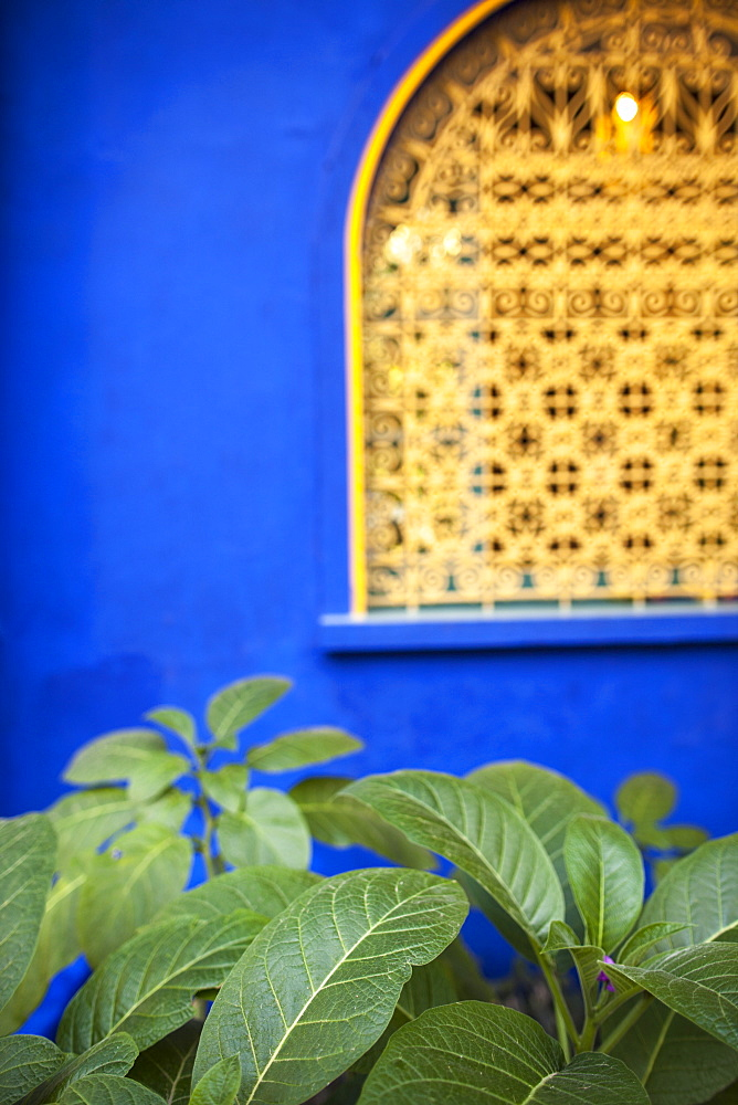 Blue wall in the Jardin Majorelle, Marrakech, Morocco, North Africa, Africa