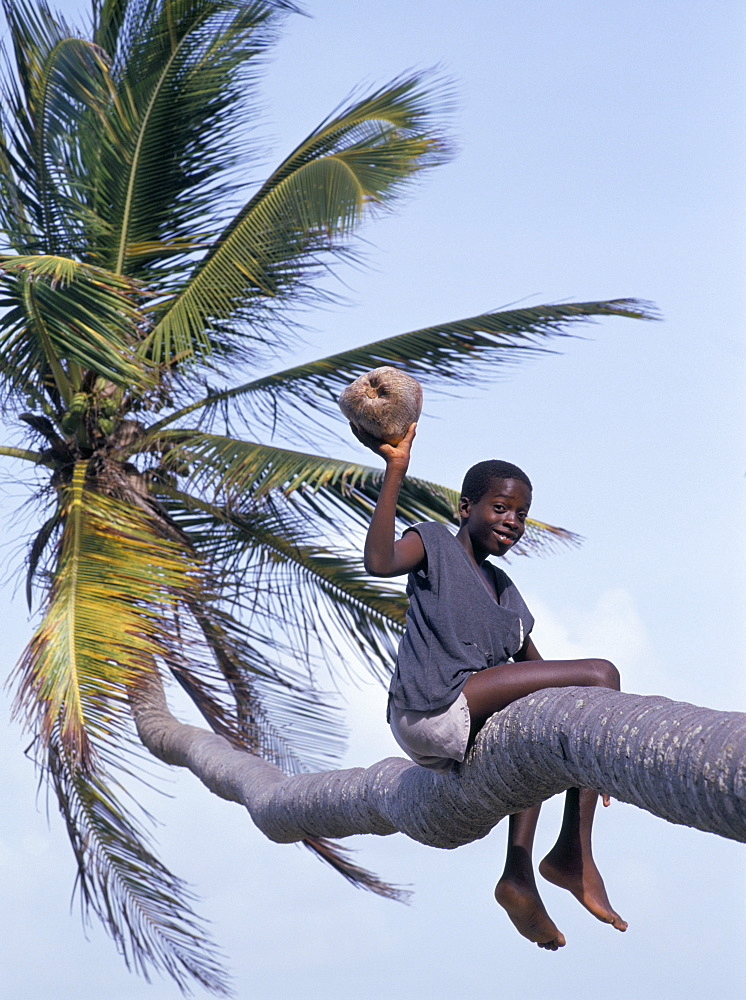 Boy holding a coconut in a palm tree, Tobago, West Indies, Caribbean, Central America - 728-763