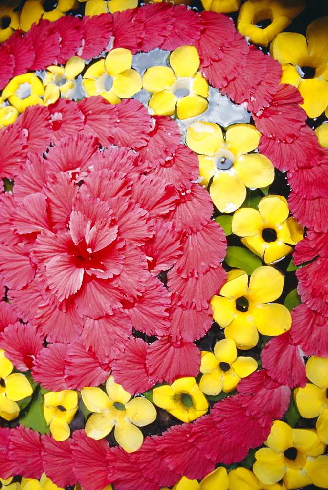 Red flowers, Thailand  - 728-969