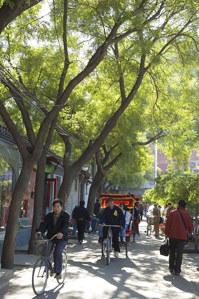 A tree lined avenue in a local neighbourhood Hutong area of Beijing, China, Asia