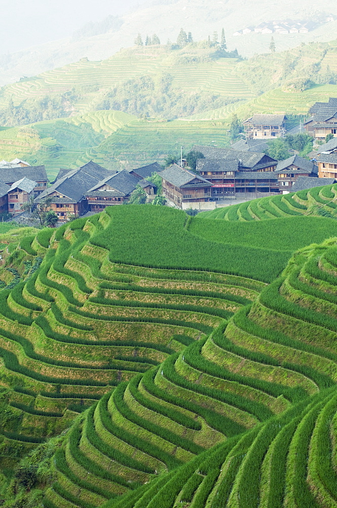 Dragons Backbone rice terraces, Longsheng, Guangxi Province, China, Asia