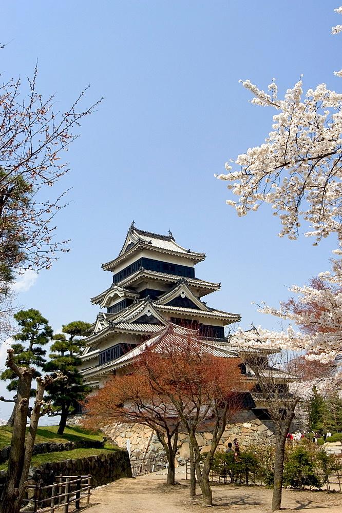 Cherry blossoms, Matsumoto Castle, Matsumoto city, Nagano prefecture, Honshu island, Japan,Asia
