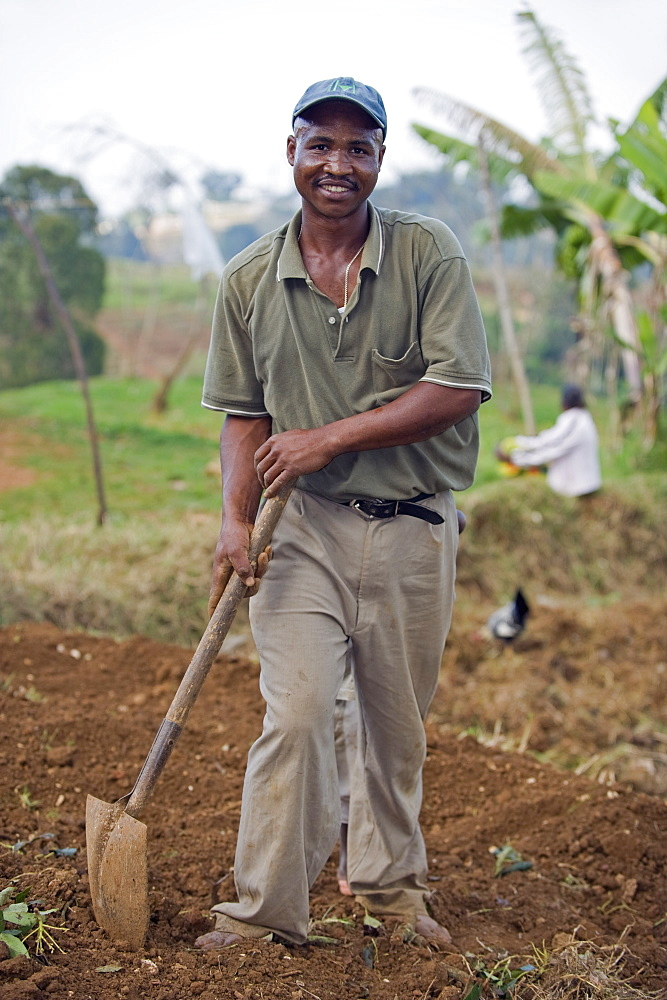 Farmer preparing his field, Kenscoff Mountains above Port au Prince, Haiti, West Indies, Caribbean, Central America