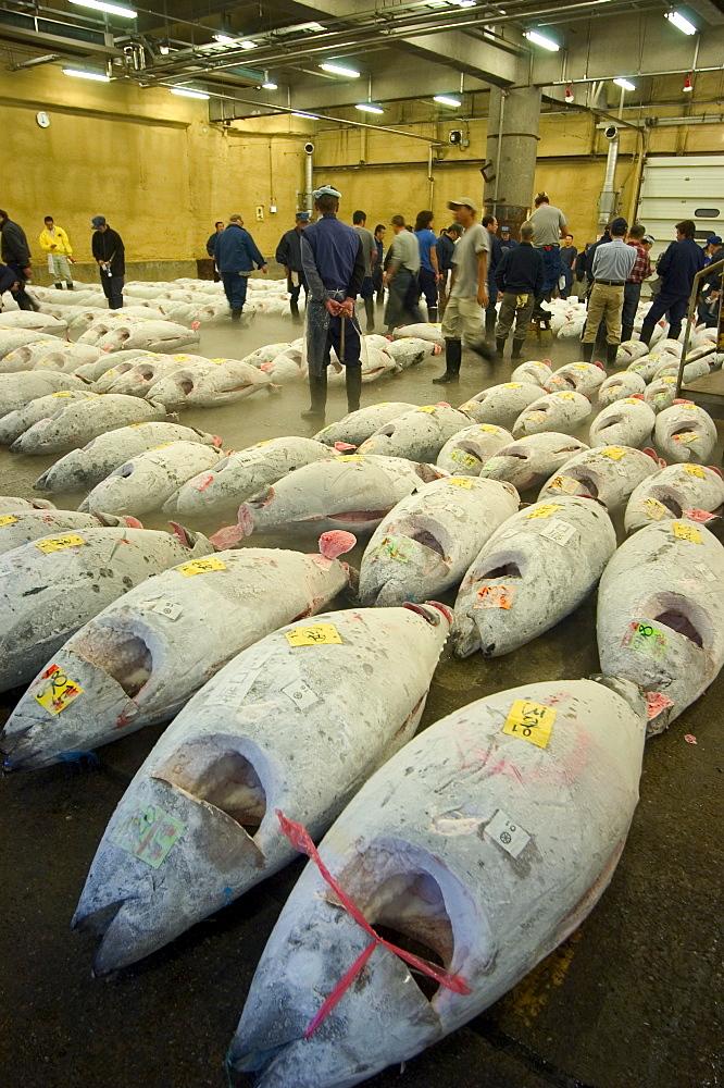 Tsukiji Fish Market, Tsukiji, Tokyo, Honshu, Japan, Asia - 733-512