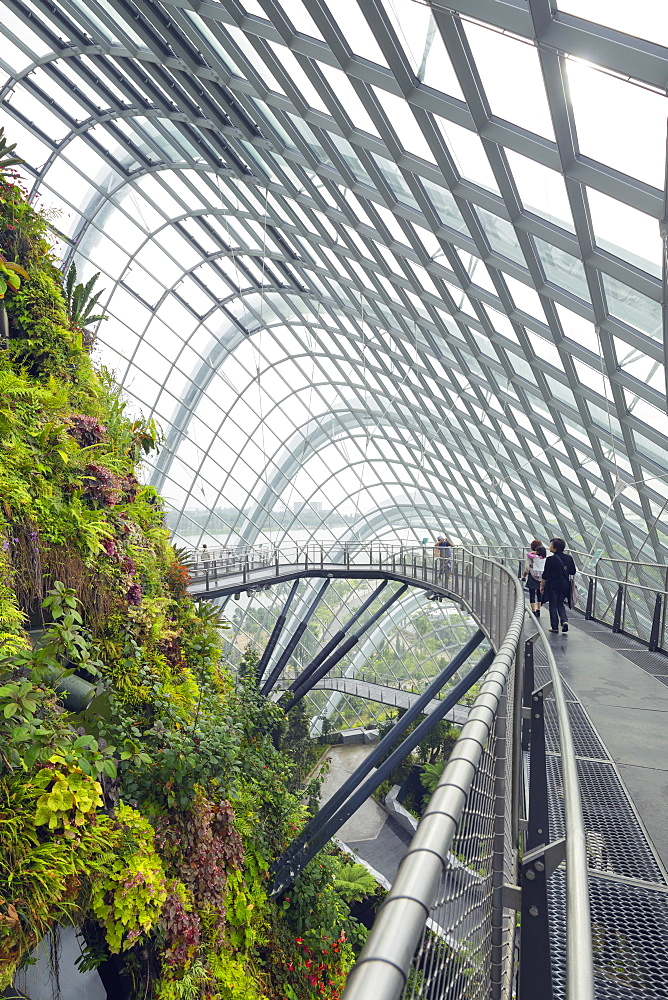 Canopy walkway, Gardens by the Bay, Cloud Forest, botanic garden, Singapore, Southeast Asia, Asia