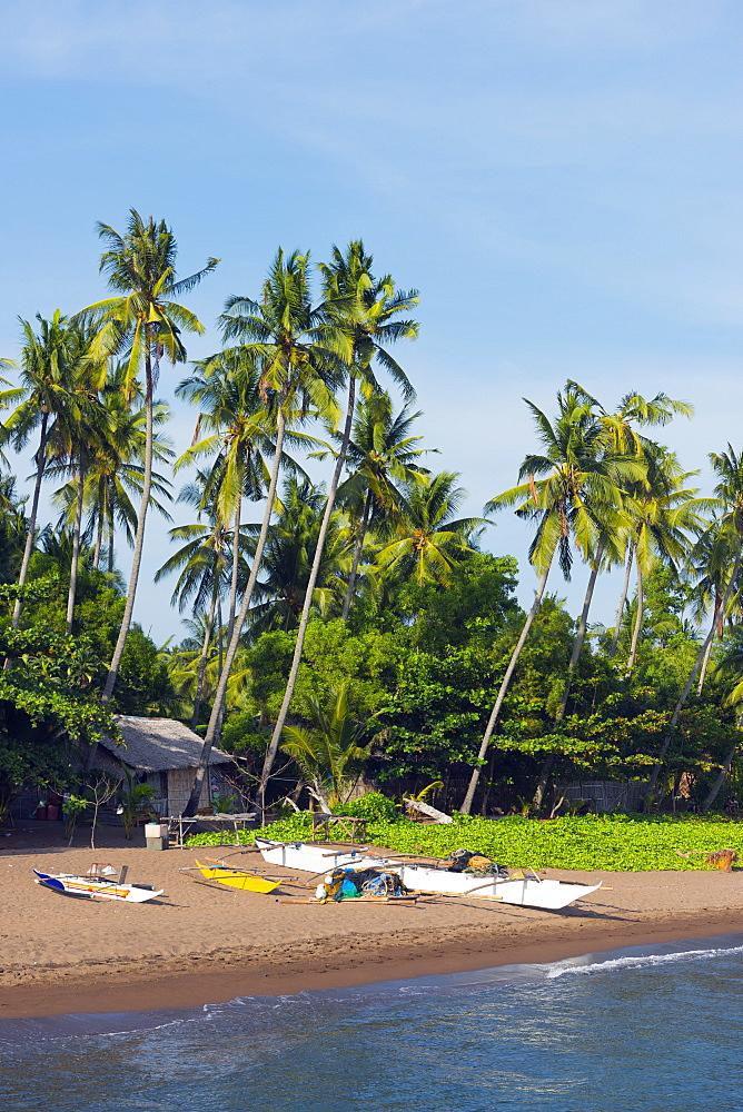 Apo Island, Cebu, The Visayas, Philippines, Southeast Asia, Asia