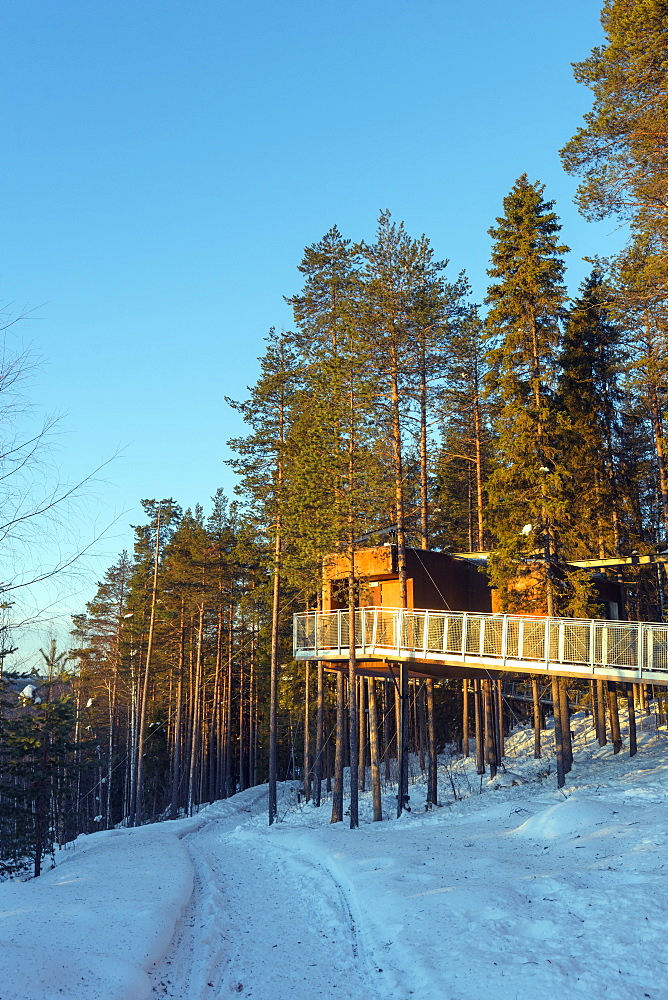 The Dragonfly room, The Tree Hotel, Lapland, Arctic Circle, Sweden, Scandinavia, Europe