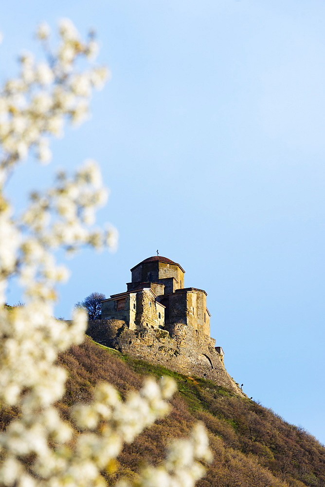 Jvari Church (Holy Cross Church),and spring blossom, Mtskheta, historical capital,UNESCO World Heritage Site, Georgia, Caucasus, Central Asia, Asia