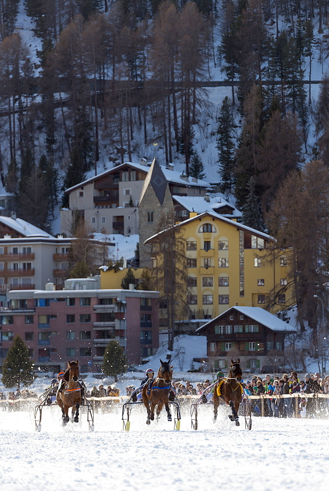 Trap event, White Turf International Horse Race, winter, St. Moritz, Engadine, Graubunden, Switzerland, Europe