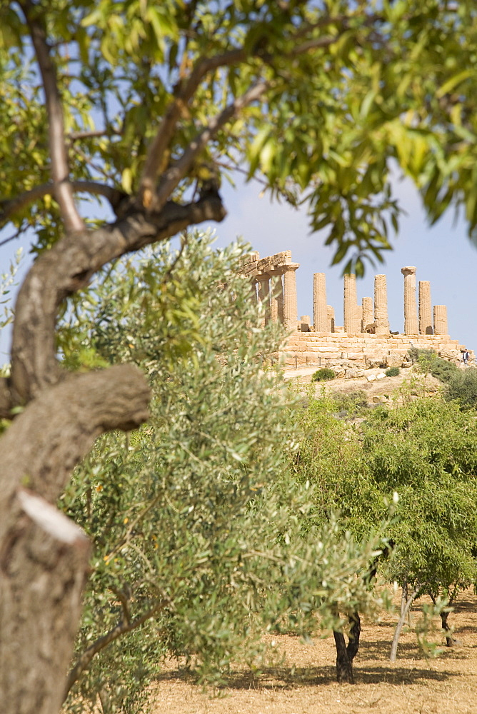 Olive and almond trees and the Temple of Juno, Valley of the Temples, Agrigento, UNESCO World Heritage Site, Sicily, Italy, Europe
