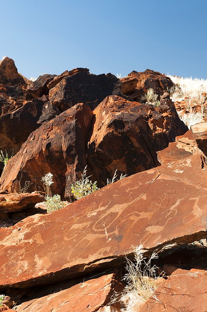 Rock engravings, Huab River Valley, Torra Conservancy, Damaraland, Namibia, Africa