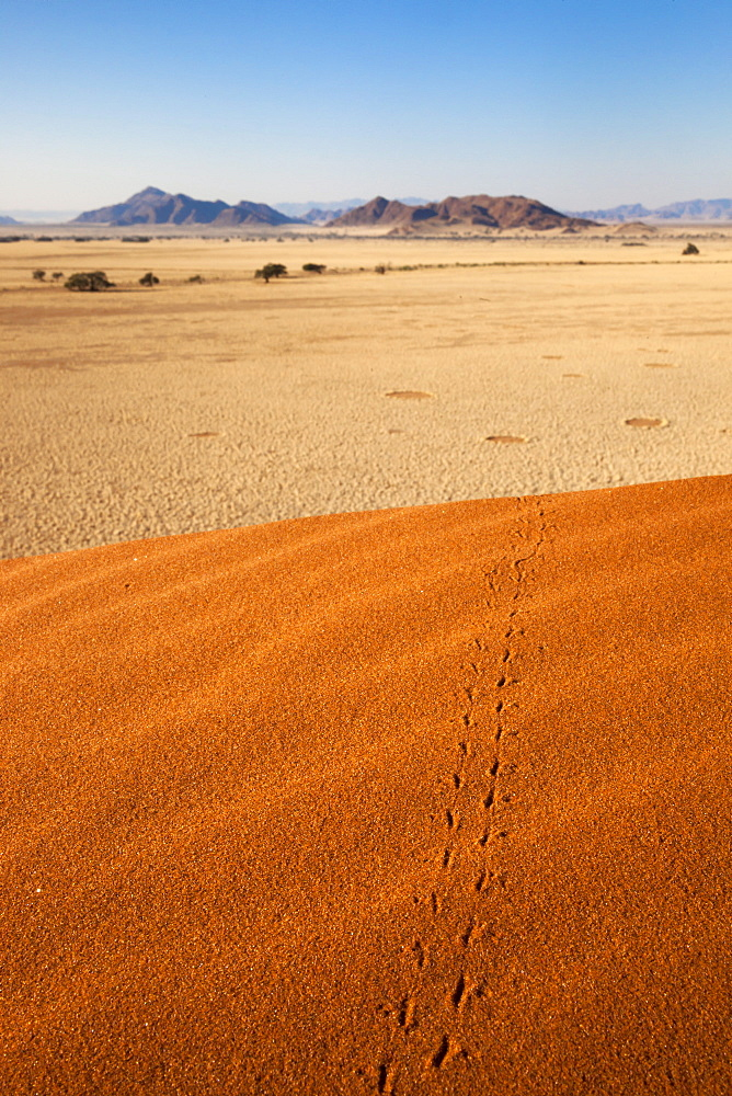 Animal tracks in sand, Namib desert, Namibia, Africa