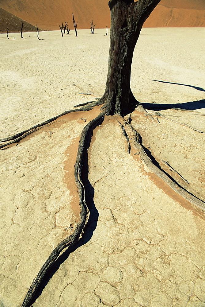 Dead Vlei, Sossuvlei dune field, Namib-Naukluft Park, Namib Desert, Namibia, Africa - 743-191