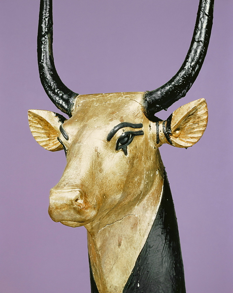Gilded and stuccoed wooden head of the sacred cow, from the tomb of the pharaoh Tutankhamun, discovered in the Valley of the Kings, Thebes, Egypt, North Africa, Africa