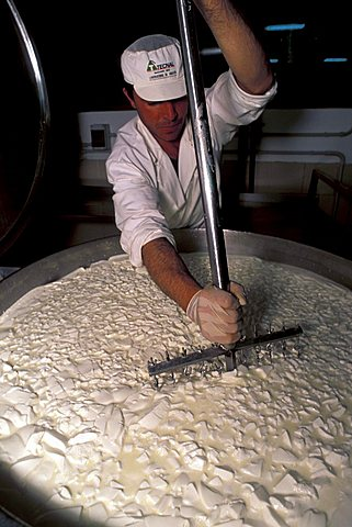"""Lischeto"" Farm, Pecorino cheese production, Volterra, Val di Cecina, Toscana, Italy"